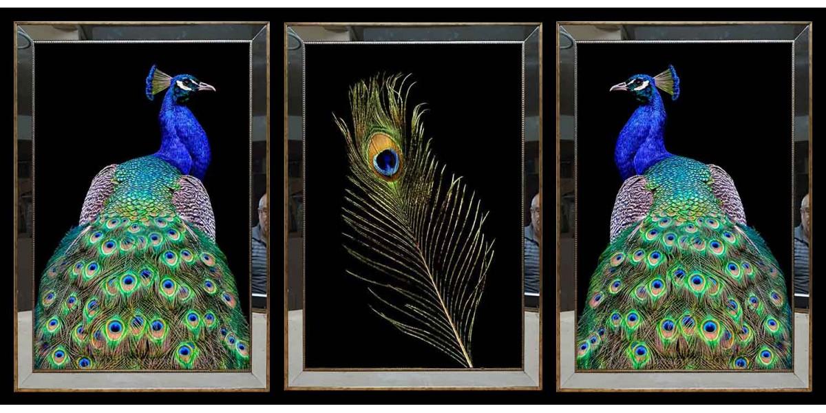 Tavus Kuşu Ve Tavus Kuşu Tüyü Aynalı Tablo